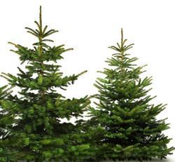 kolekcja naturalnych drzewek